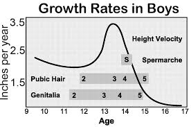 Pubic Hair Growth Chart At What Age Do Boys Stop Growing Famlii