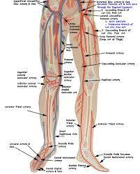 Vein Chart For Shooting Up Best Veins For Injection Related Keywords Suggestions