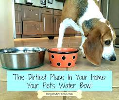 best outdoor dog water bowl designs auto fill fountain dish