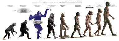 Image result for hominids