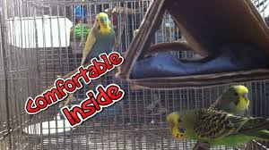 how to make a homemade cardboard birdhouse for budgies