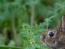 plants that rabbits don t prefer