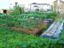 Small Picture Backyard Vegetable Garden Ideas Garden Design Ideas