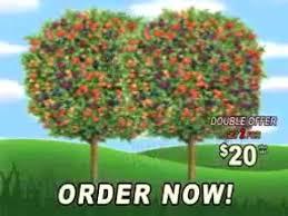 OIKOS Tree CropsFruit Salad Trees Usa