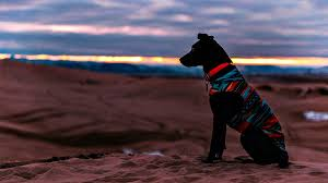 dog wearing aztec jacket in the dessert diy dog clothes and coats you should make