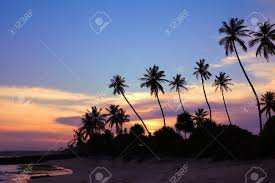 black silhouettes of palm trees against the sky painted in sunset colors stock photo 36674207