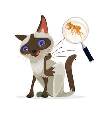 cat character scratches fleas off on white background