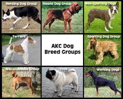 breed group