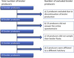 Flow Chart Showing Included And Excluded Broiler Producers