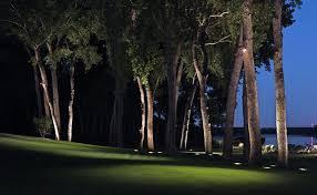 landscape lighting trees. landscape lighting trees i