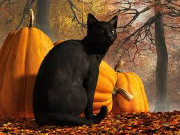 halloween black cat. Beautiful Halloween Black Cat At Halloween By Deskridge  For C