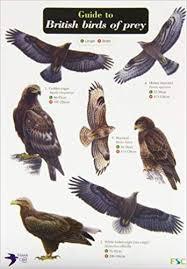 Guide To British Birds Of Prey Chart Amazon Co Uk Harry