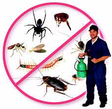 شركة مكافحة حشرات بالعديد بالمنطقة الشرقية