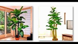 plants for office cubicle. Office Cubicle Decor Plants For