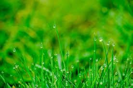 grass blade close up. #blade Of Grass #blur #bokeh #close Up #depth Field # Blade Close