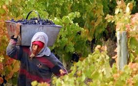 Resultado de imagen para desempleo en viñas mendocinas