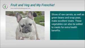 Whats The Best Food To Feed My French Bulldog