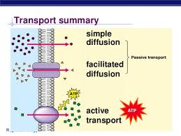 Venn Diagram Of Diffusion Osmosis And Active Transport 7th Grade Active Transport Diffusion Osmosis And Passive