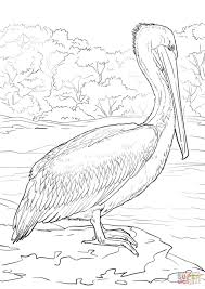 Small Picture Eastern Brown Pelican coloring page Free Printable Coloring Pages