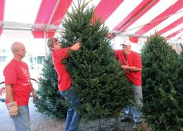 Local Christmas Tree Businesses Are Booming  Barton Chronicle Local Christmas Tree Lots