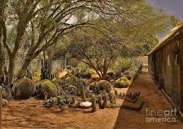tucson cactus farm