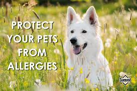 Allergy Season Is Arriving! Here's How to Help Your Itchy Dog ...