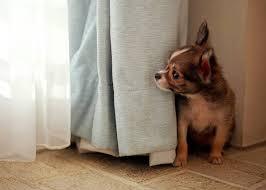 Боязнь грозы и громких шумов у собак и кошек собака боится грома  Боязнь грозы и других громких шумов у собак и кошек