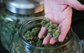 Image result for marijuana medical