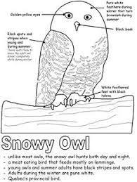 Small Picture Snowy Owl Facts Owl facts Snowy owl and Worksheets