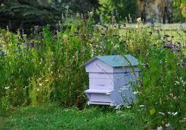"""Résultat de recherche d'images pour """"ruche d'abeille dans la nature"""""""