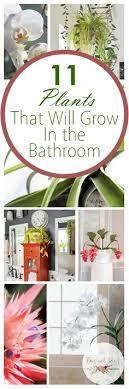 Indoor Garden Design Ideas Classy 48 Best Indoor Garden Ideas Images On Pinterest In 48 Vegetable