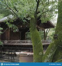 Tronc D Arbre De Sakura Couvert De La Mousse Vieille Maison En Bois