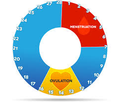 Typical Menstrual Cycle Chart Menstrual Cycle Explained Loma Linda University Fertility