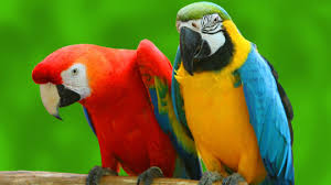 Image result for parrot cute