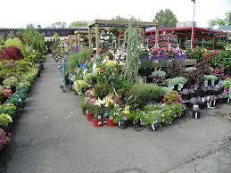 garden nurseries near me. Gypsy Garden Nursery Near Me 16 On Creative Home Decoration Idea With Nurseries R