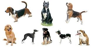 hunting dogs collage