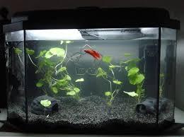 furniture aquarium. island aquarium furniture