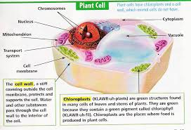 animal and plant cells for 6th grade. Interesting 6th Picture With Animal And Plant Cells For 6th Grade