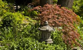 japanese garden lighting. Japanese Garden Lighting. Part Of - Lighting And Red Maple Leaves. Stock