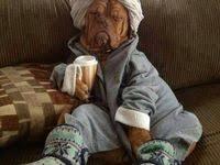 900+ <b>French mastiff</b> ideas | <b>french mastiff</b>, mastiffs, bordeaux dog