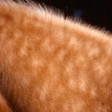 How Long Do Lice Live Furniture Unique Lice Alert the Horse