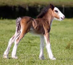 Image result for cute foals horses