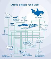 diagram arctic ocean