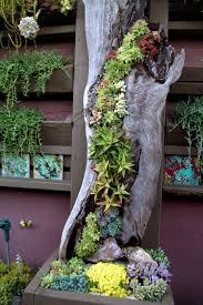 outdoor succulent garden ideas