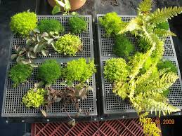 How To Make A Living Wall 17 Best Living Walls Images On Pinterest Living  Walls Vertical