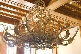 large antler chandelier antler chandeliers real antler chandelier