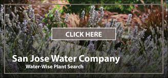Sustainable Planting Design The Easy Way To Choose Sustainable Plants Sustainable