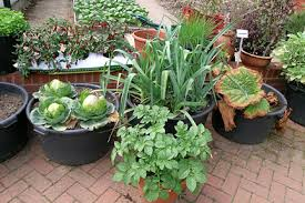 container gardening vegetables. Quick Facts Container Gardening Vegetables E