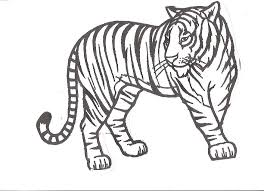 Small Picture Tiger Outline Drawing AZ Coloring Pages Tiger Coloring Page In