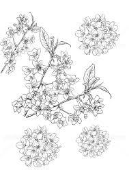桜の線画カットイラスト イラスト素材 427198 フォトライブラリー